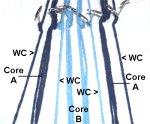 Arrangement of Cords
