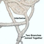Intertwine Branches